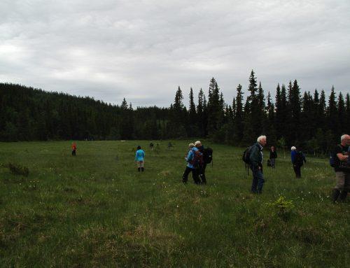 BioFokus ledet slåttemyrtur i Nordre Land