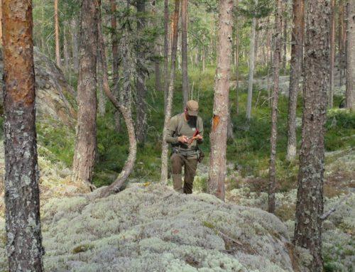 Antatt utdødd barkbille gjenfunnet i Notodden etter 100 år