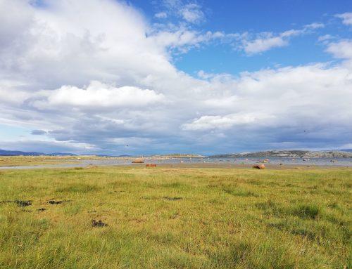 Innsamling av stankelbein i Finnmark